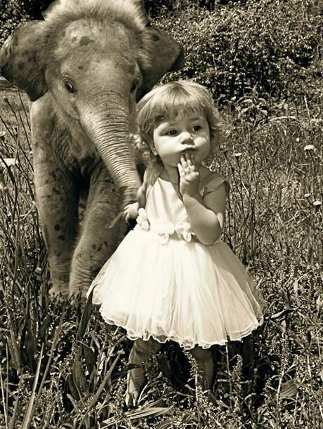Little Girl & Baby Elephant